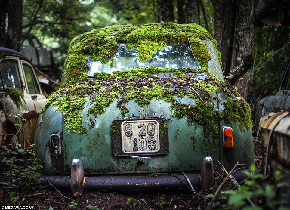 Carros abandonados em floresta em Bastnas, Suécia