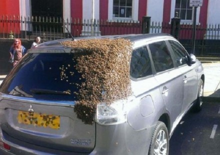 abelhas mitsubishi outlander 1