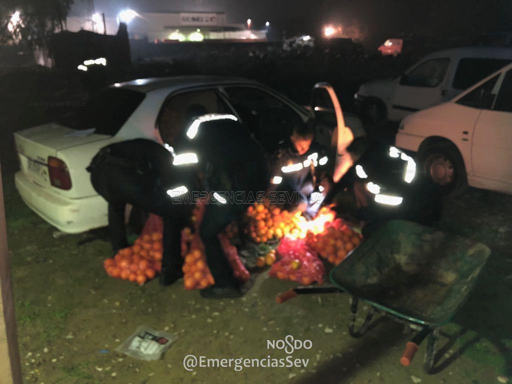 Roubo laranjas Espanha 2018