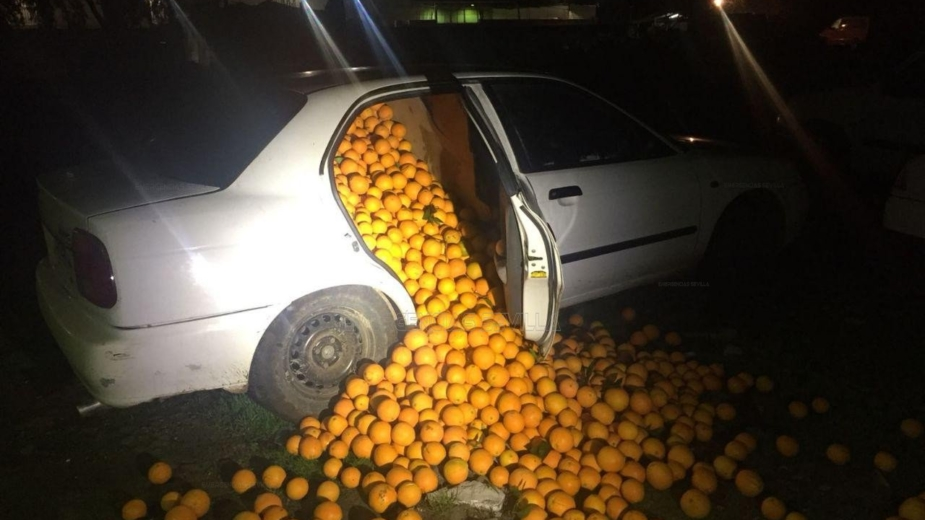 Roubo laranjas em Espanha