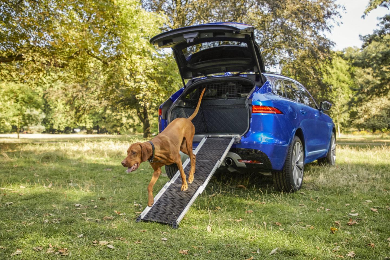 Acessórios para cães da Jaguar