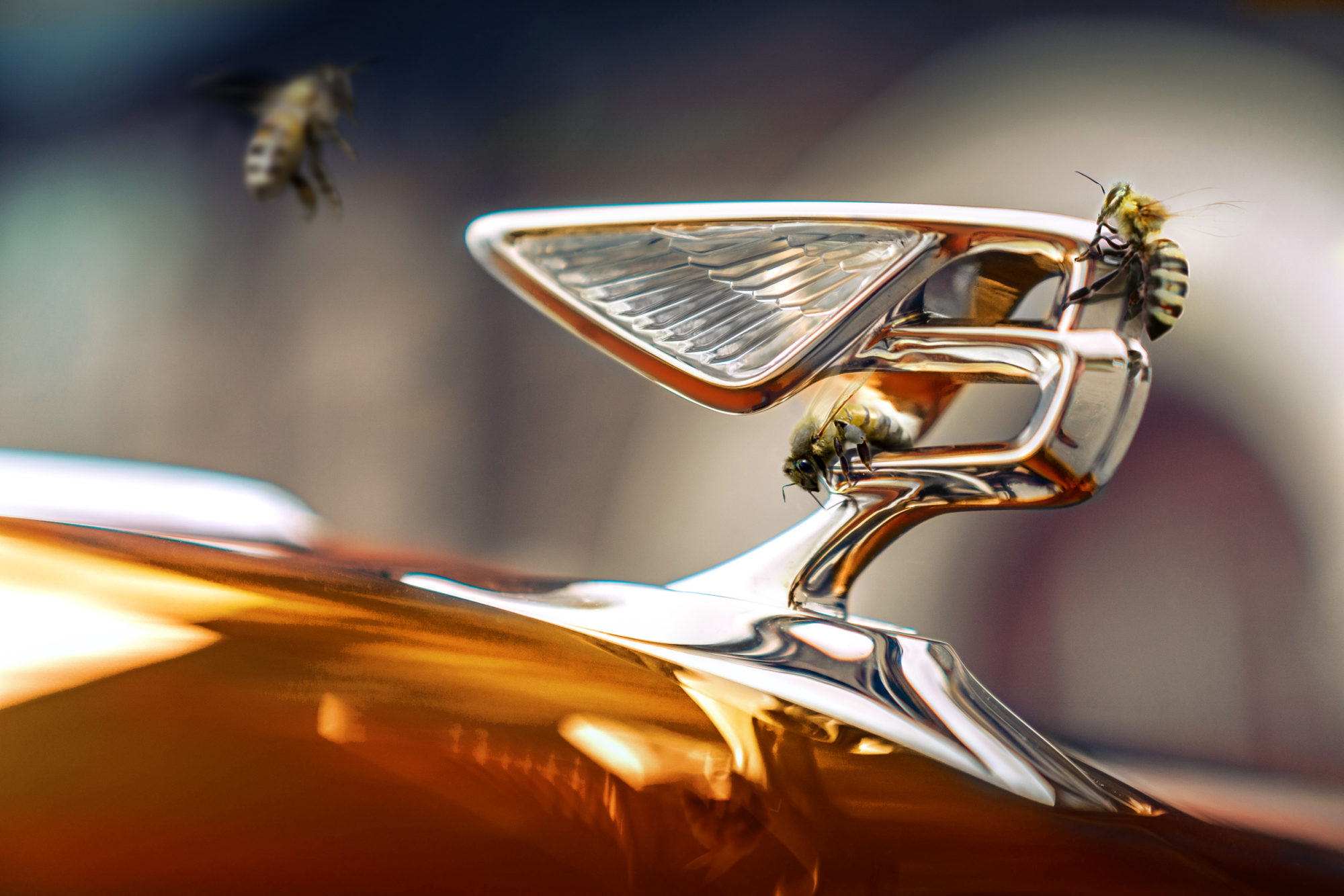 Bentley Flying Bees