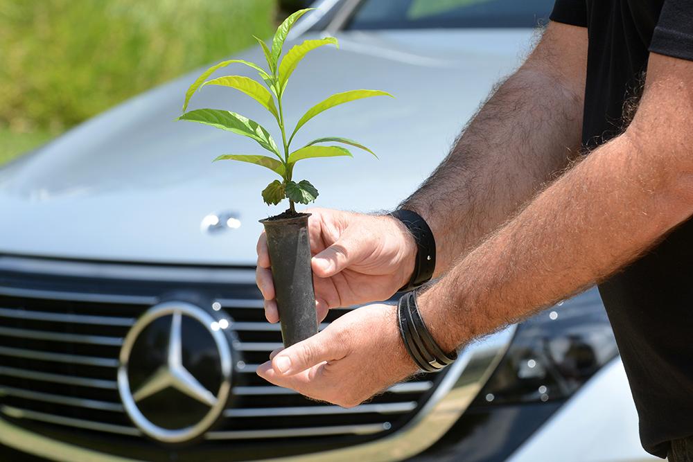 projeto Floresta Mercedes-Benz