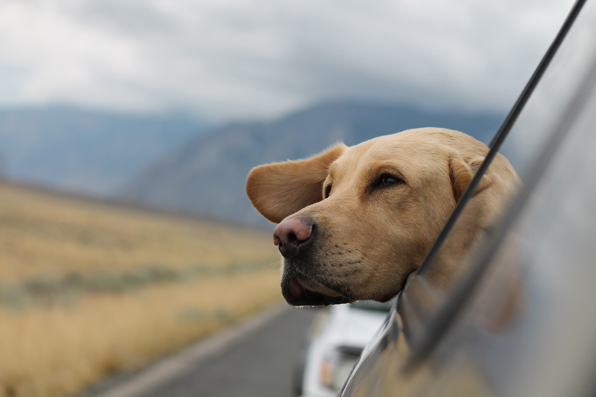 Cão à janela